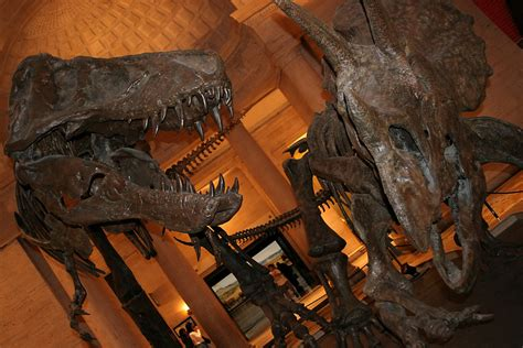 Dinosaurs, fossils and so much more: discover the Natural