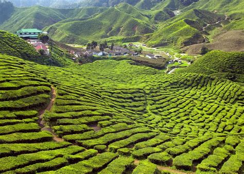 Visit Cameron Highlands on a trip to Malaysia | Audley Travel