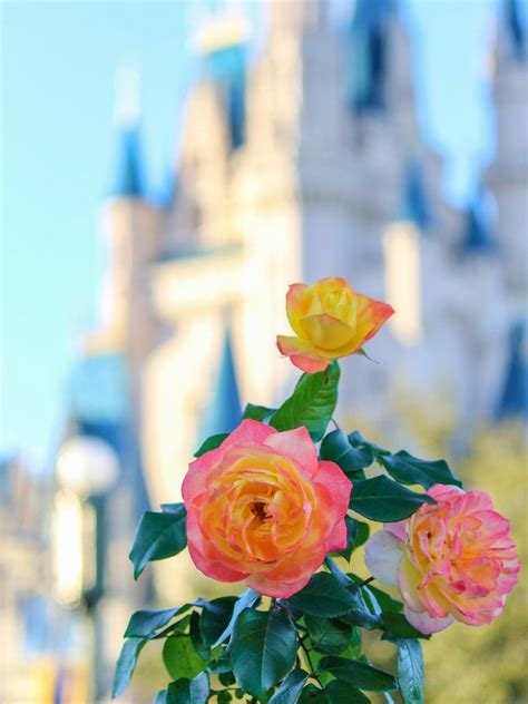 Quiz: Guess the Disney film from the flowers   Funny how