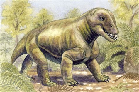 Moschops - Facts and Pictures